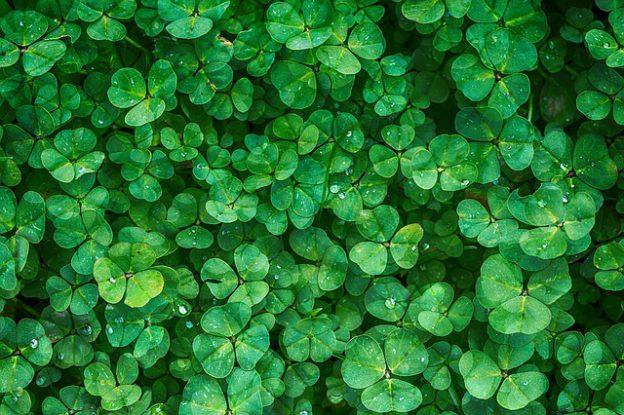 clover-1225988_640